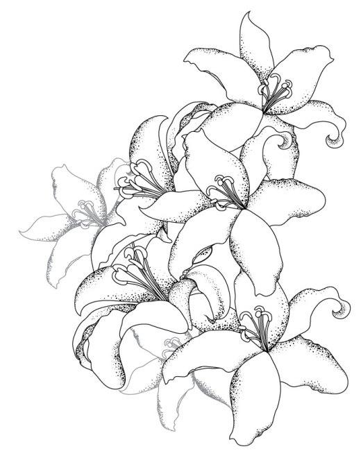 Bouquet de lys coloriage pour adulte gratuit
