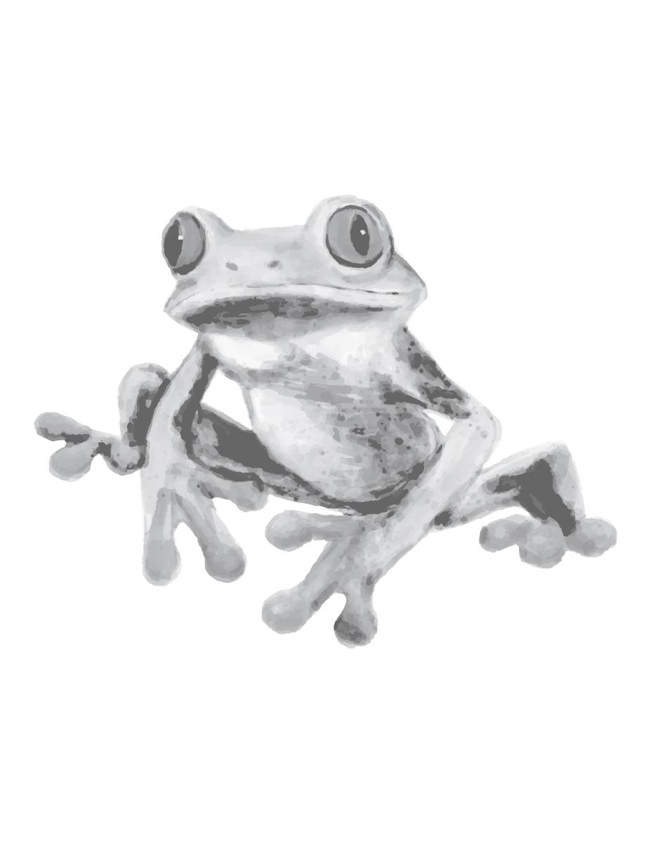 Dessin coloriage page grayscale grenouille réaliste