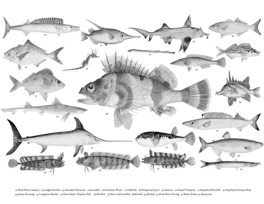 Encyclopédie poisson coloriage à reproduire pour adulte