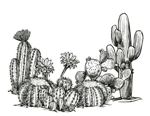 Cactus à colorier artherapie gratuit pour adulte