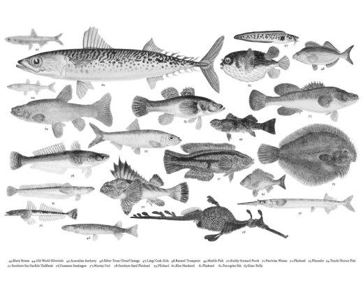Page pour adulte variété de poisson tons de gris