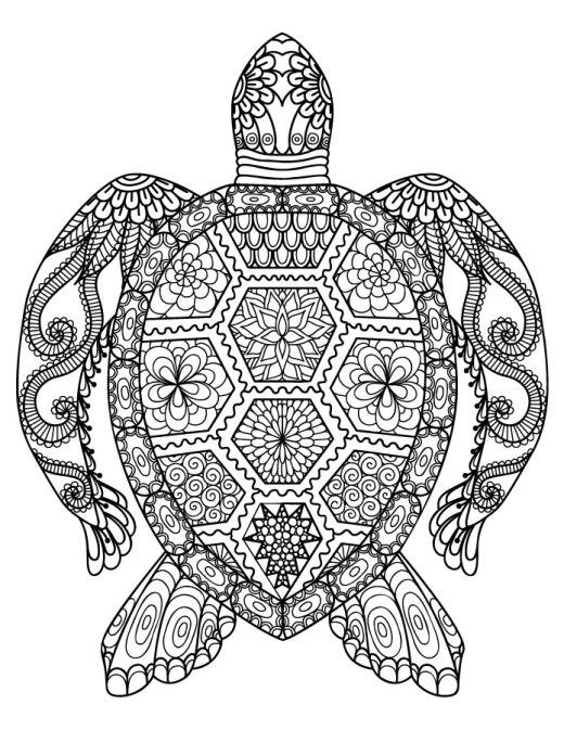 Dessin de animaux à imprimer tortue gratuite