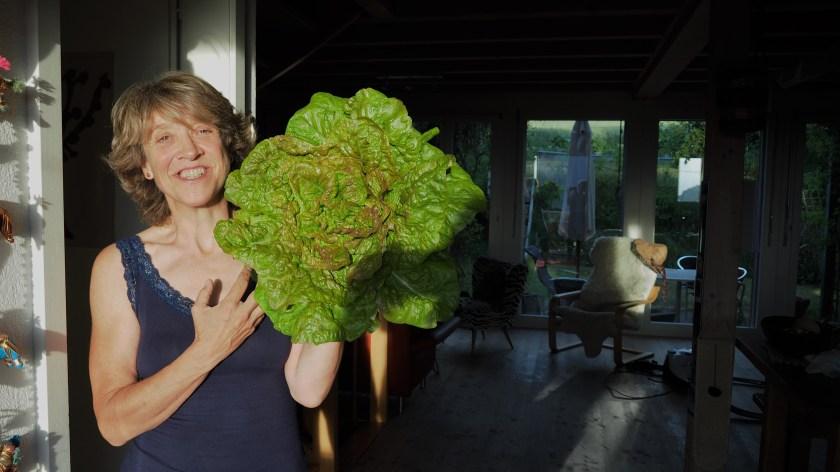 Beautiful organic lettuce