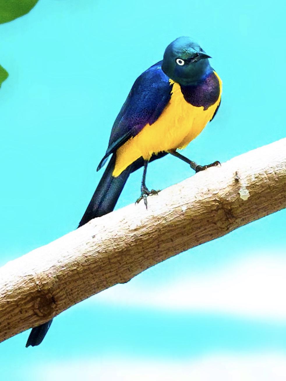 Cyril the Sensatiinal Sunbird, #2 of 3