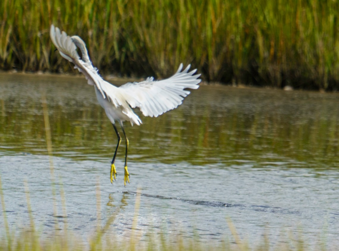 Magical Marsh Dancer, #2 of 5