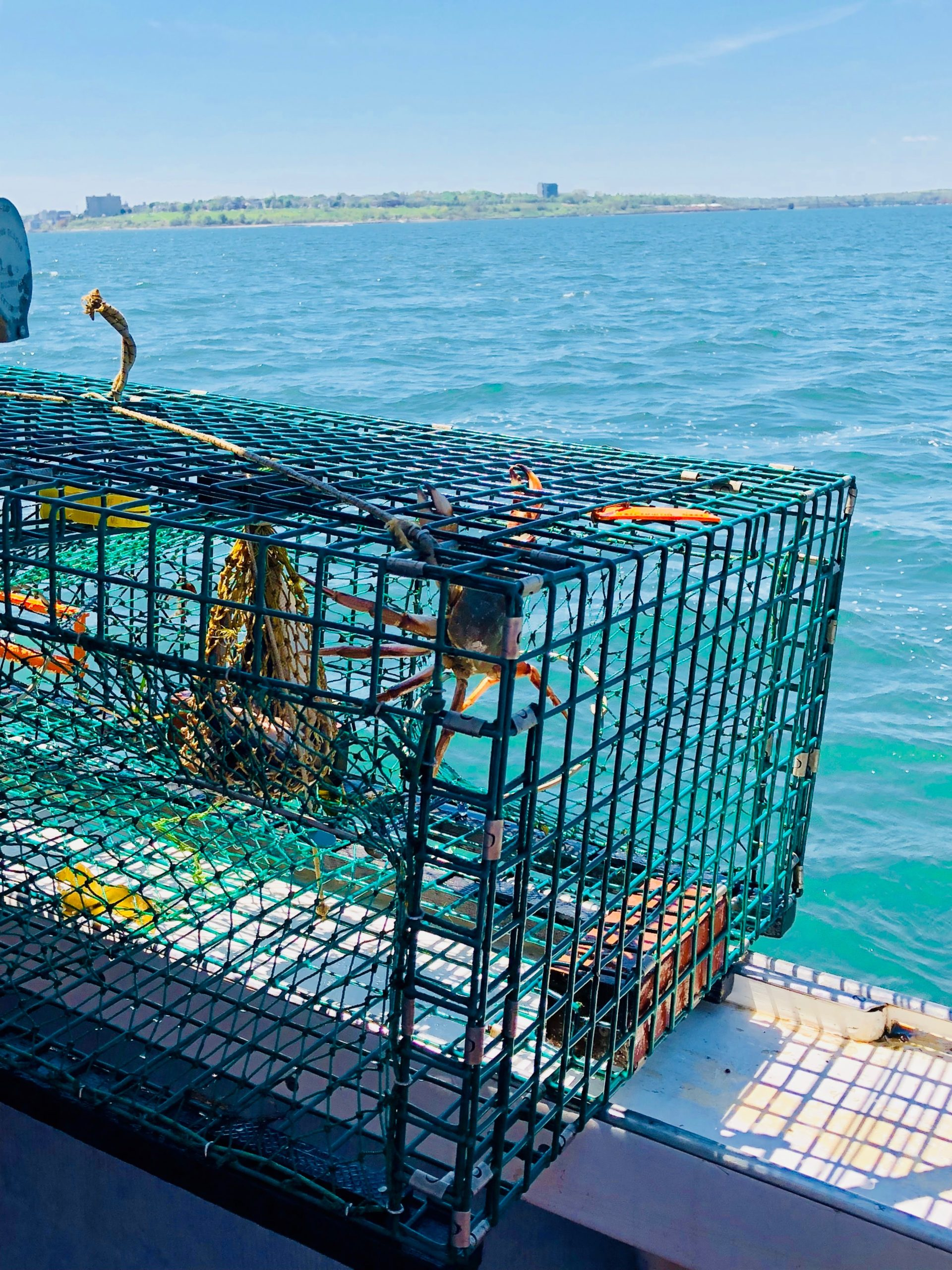 portland peche homard
