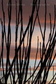 branche sur lenticulaires
