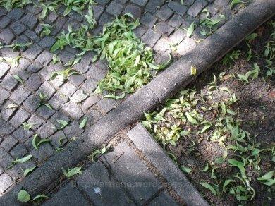 trottoir sous tilleul