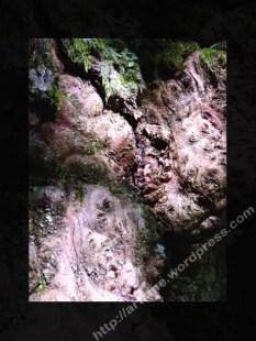 Tricorce agrandi foncé