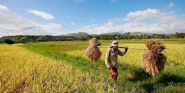 Major issues in agricultural development