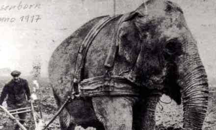 The Elephant on the Factory Floor