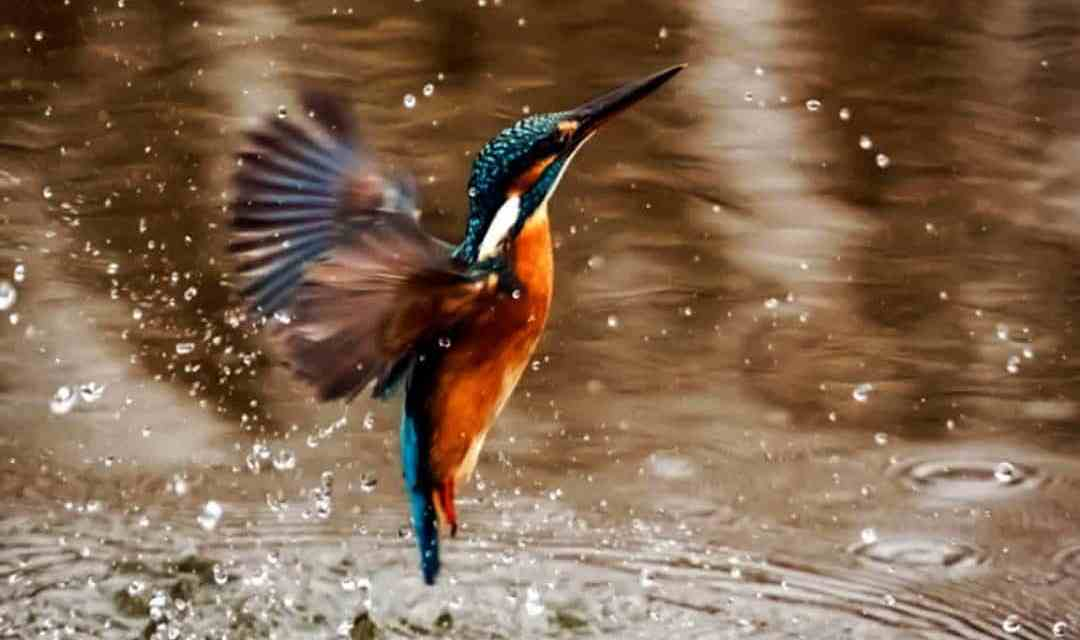 When Kingfishers Catch Fire
