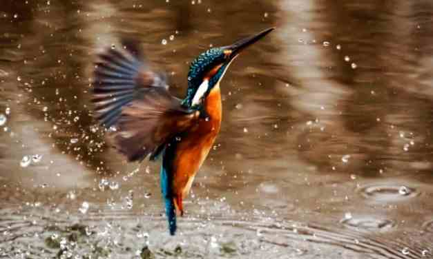 When Kingfishers Catch Fire