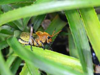 11 Most Destructive Garden Insects and How You Can Protect Your Plants from Them