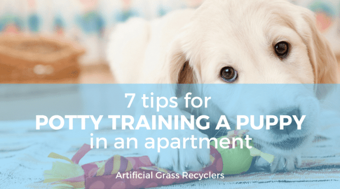 Potty Training A Puppy In An Apartment