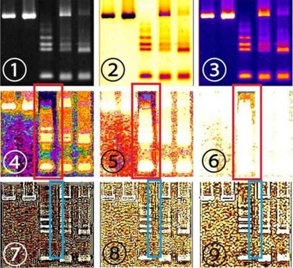 Analysis of an electrophoresis image by LPixel founder Yuki Shimahara regarding STAP cells discovered by a team led by scientist Haruko Obokata. Image 1 is the original, while images 4 through 6 show cut-and-pasted parts highlighted in the red rectangles.