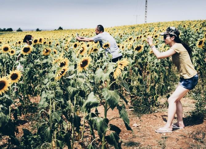 Generation-Z-im-Sonnenblumenfeld-beim-Fotos-machen