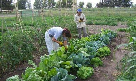 Se realizará una charla sobre huertas de verano en la Escuela Agraria