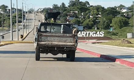 «Negro»,el perro que viaja todos los días en el techo de la camioneta de su dueño
