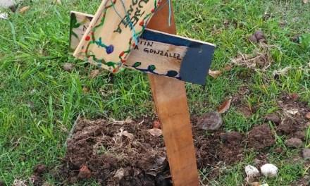 SE ROBARON LOS ÁRBOLES FRUTALES PLANTADOS POR LOS ALUMNOS DE LA ESCUELA 8