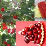 cherry untuk sakit sendi