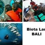 Menikmati Beragam Biota Laut Bali