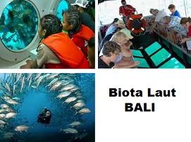 biota laut Bali