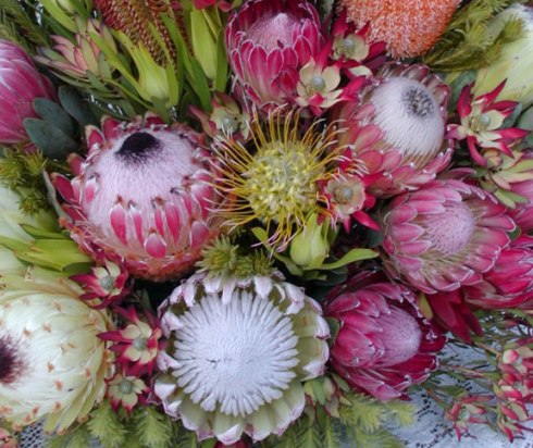 Protea_n_Pincushion
