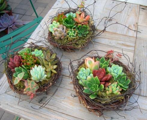 Succulent_nests