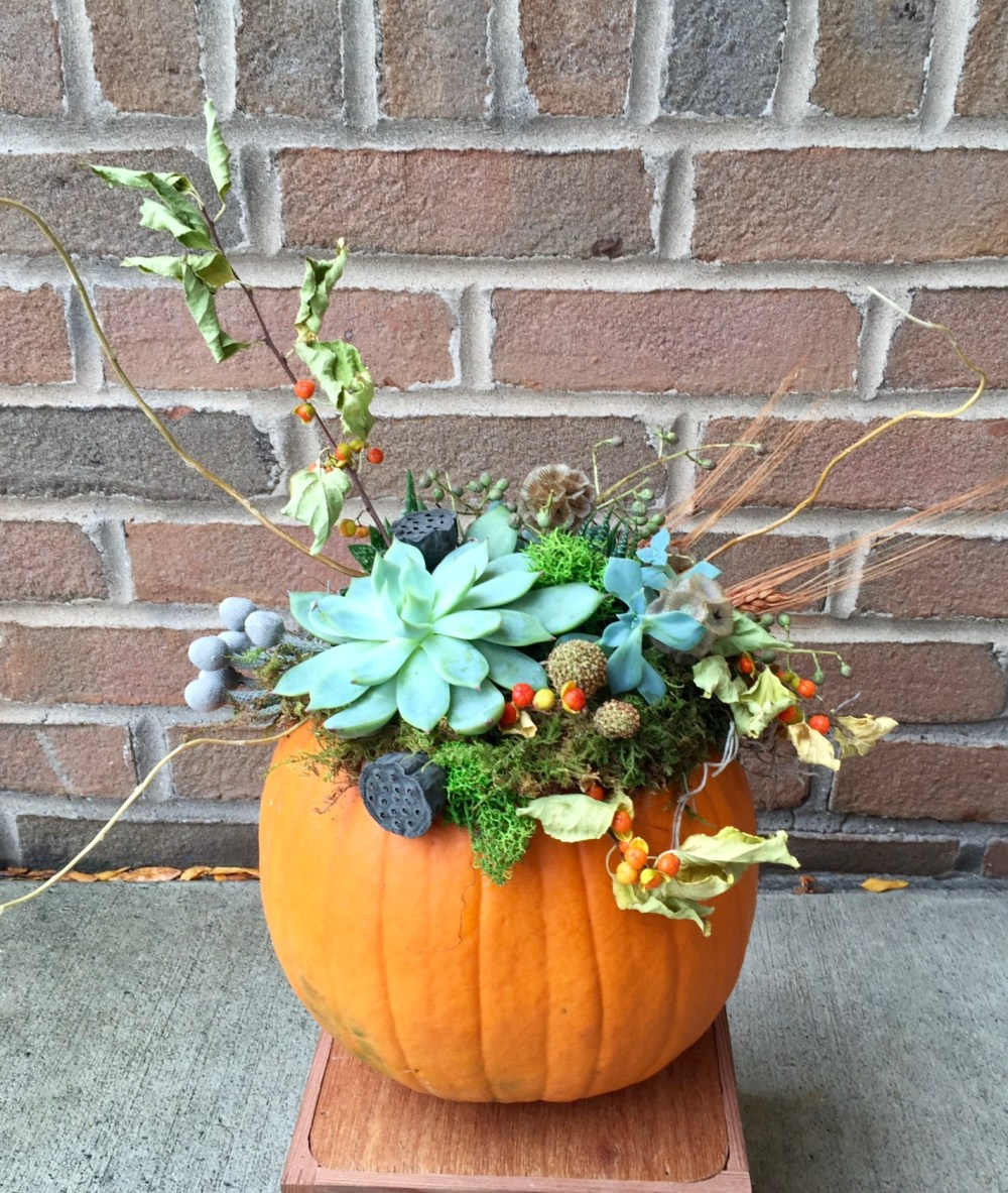 Pumpkin_succulents