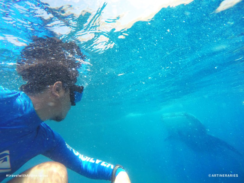 Swimming with the whale sharks in Oslob, Cebu / Photo by Jay Belamide
