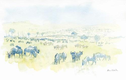 Migration Field Sketch © Alison Nicholls 2011