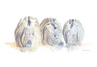 Zebra Drinking Field Sketch © Alison Nicholls 2009