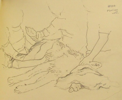The first time I have sketched a wolf's tongue!  Mexican gray wolf by Alison Nicholls.