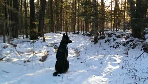 My German Shepherd dog, Chase