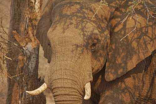 Elephant by Nigel Nicholls © 2012