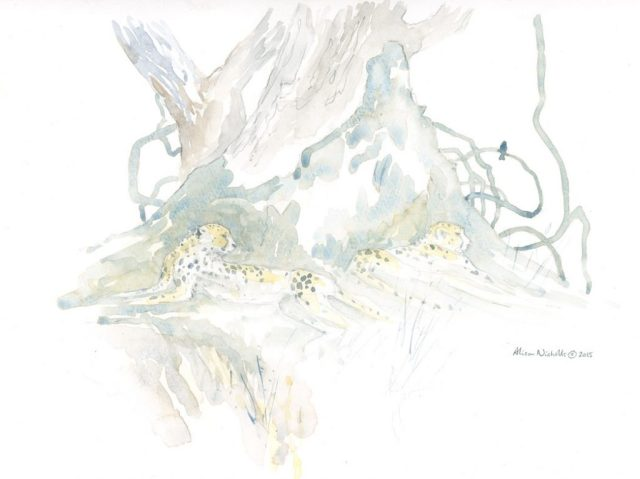 Creepers and Cheetahs Field Sketch by Alison Nicholls