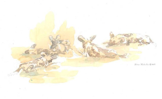 Dog Pack at Rest Field Sketch by Alison Nicholls ©2015
