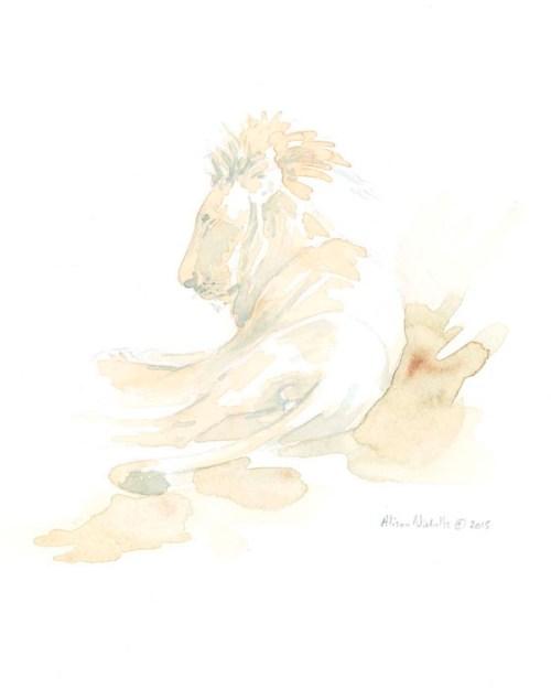 Lion Asleep Field Sketch, watercolor by Alison Nicholls