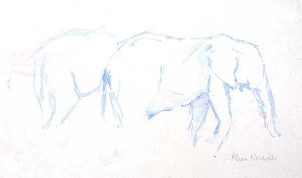 Elephant sketch by Alison Nicholls ©2015