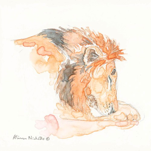 "Lion Asleep watercolor 5x5"" by Alison Nicholls ©2016"
