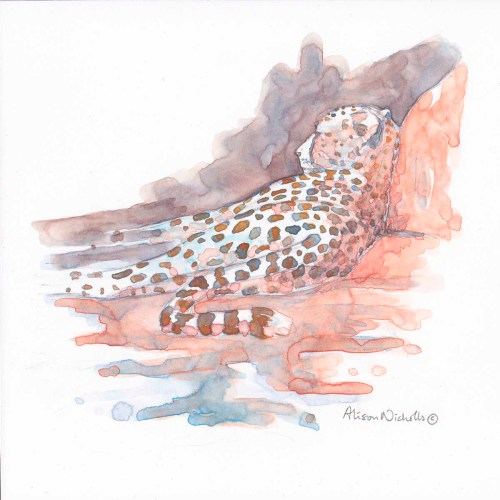 A cheetah lies againsts a rock, painted in watercolor by Alison Nicholls