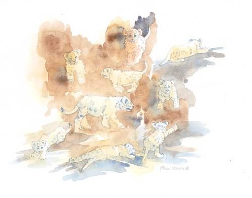 Lion Cubs Field Sketch by Alison Nicholls ©2016