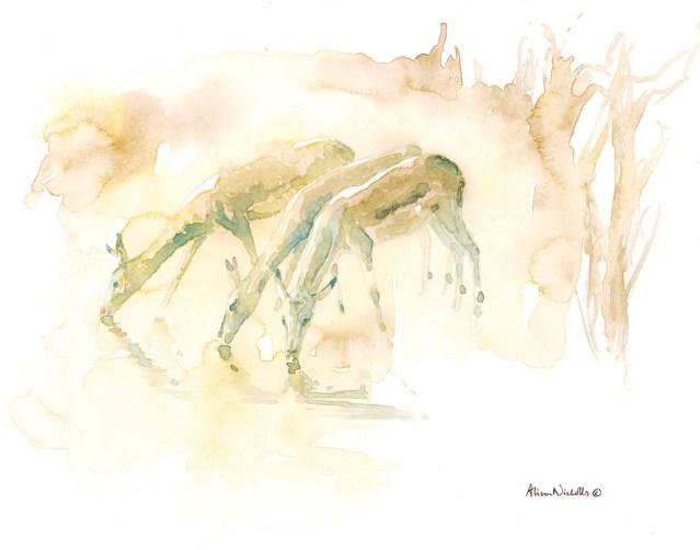 Drinking Impala by Alison Nicholls
