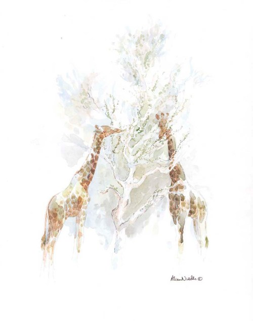 Giraffes Browsing Shepherds Tree by Alison Nicholls