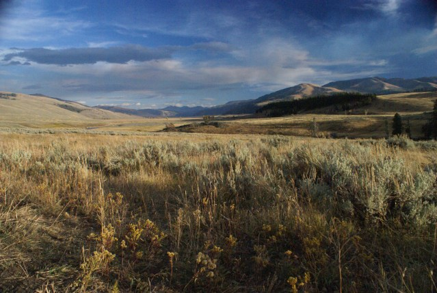 Lamar Valley, Yellowstone, USA