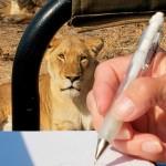 Kambaku Art Safari with Alison Nicholls