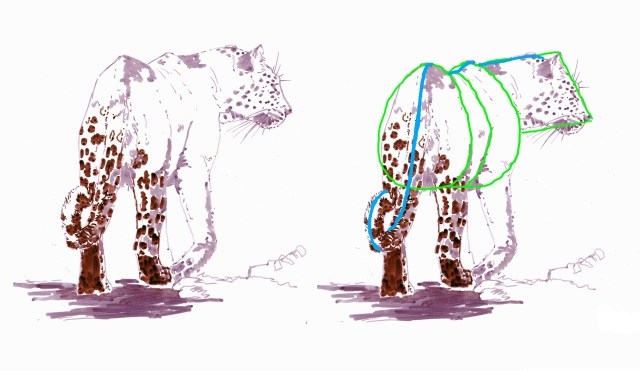 Drawing a leopard with simple shapes and lines.