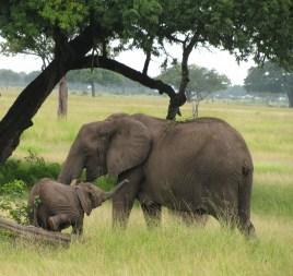 elefantit