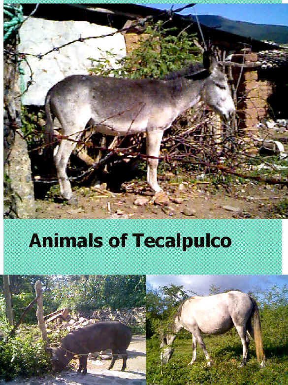 Animals of Tecalpulco